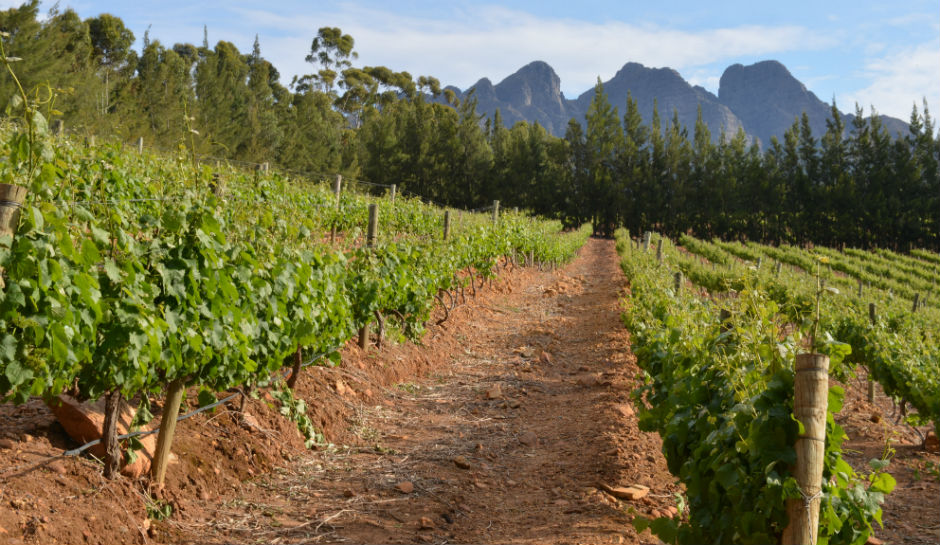 Farm Murders Rise In South Africa While Farm Attacks Down Says Afriforum